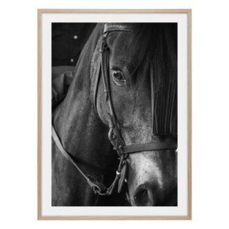 svart vit häst poster