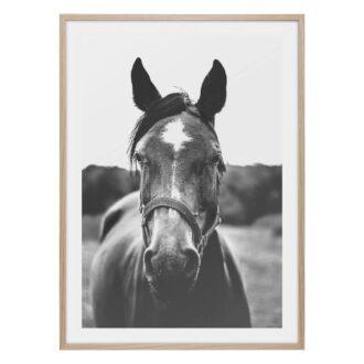 Häst poster i svart vitt