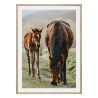 Bruna hästar sto och föl