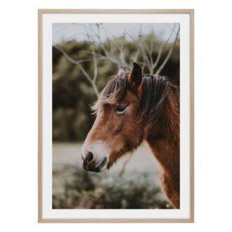 Häst poster med brun häst