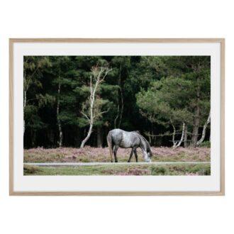 Grå vacker häst i skogen