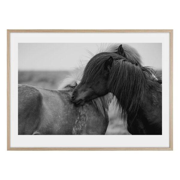 Love horses