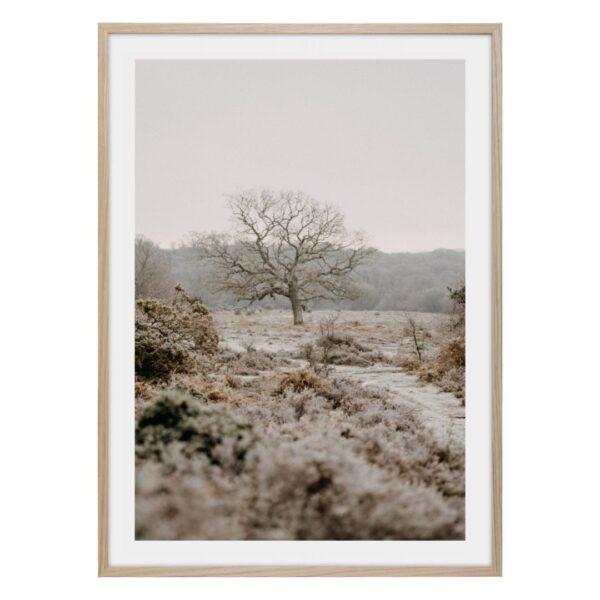 Träd i dimma