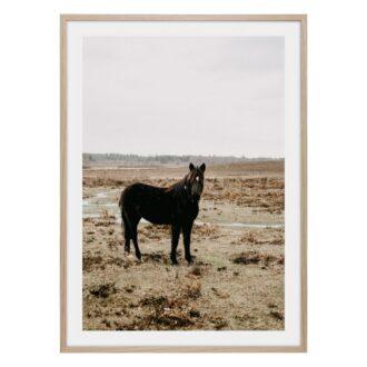 Svart häst i dimma