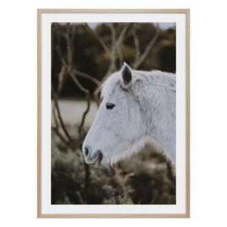 Vit fin häst