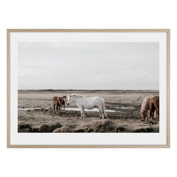 Hästar i det vilda