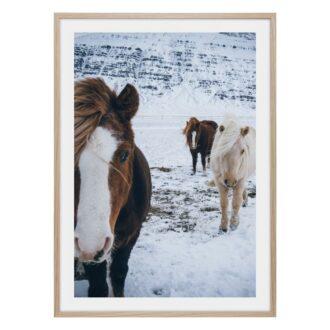 Hästar i snön