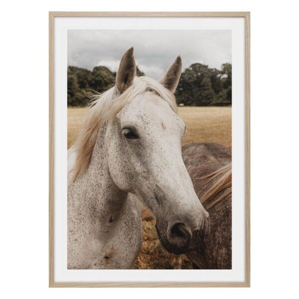 Vit vacker häst