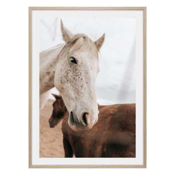 Vit och brun häst