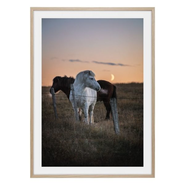 Hästar i natten