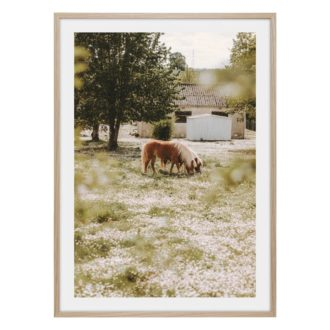 Brun häst bland vita blommor