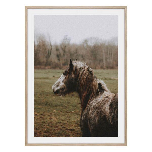Vildhäst