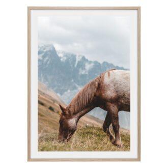 Häst uppe i bergen